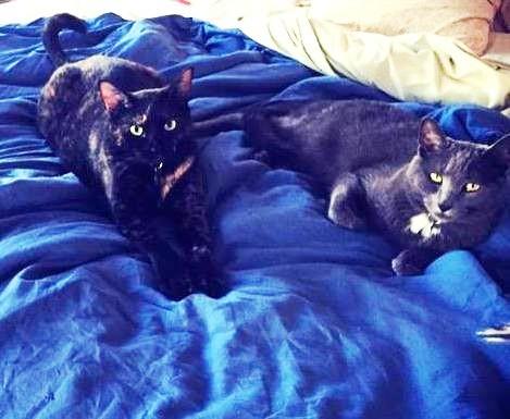 Introducir a los gatos 7