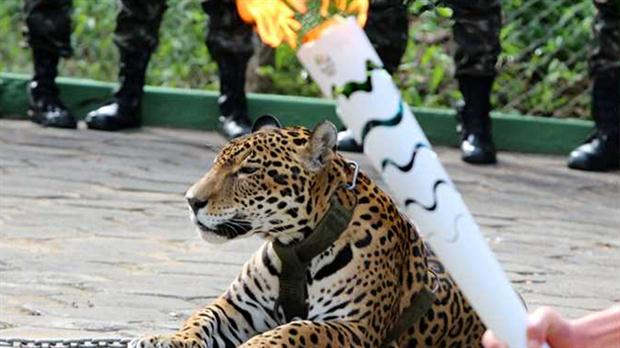 Juma-jaguar-Juegos-Olimpicos-Rio-2016-3