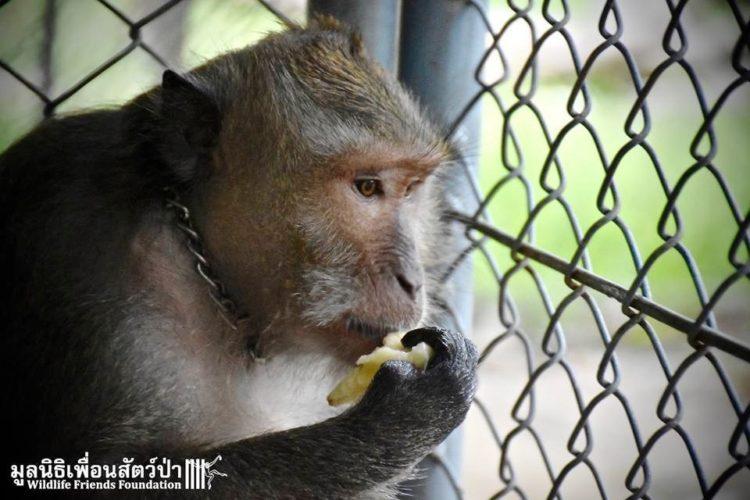 Mono iba a ser asesinado por agresivo 1