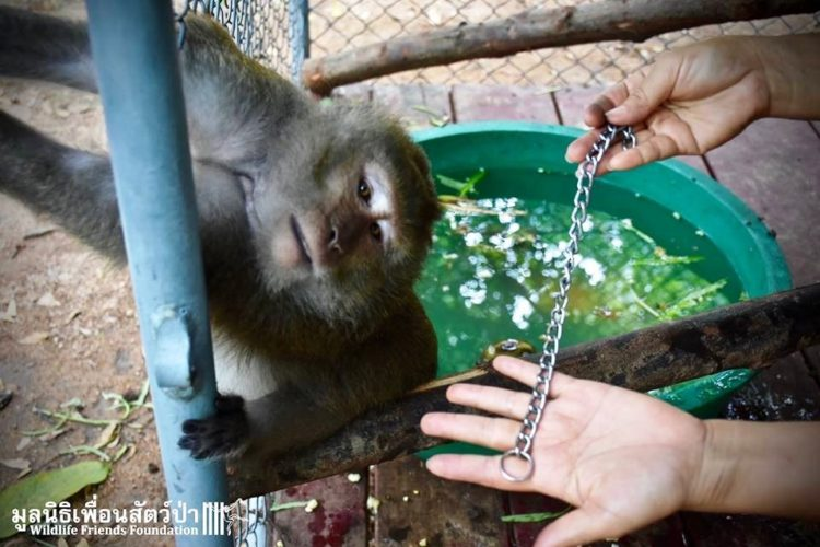 Mono iba a ser asesinado por agresivo 10