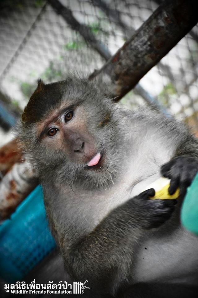 Mono iba a ser asesinado por agresivo 11