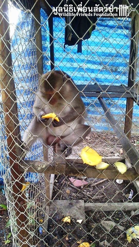 Mono iba a ser asesinado por agresivo 3