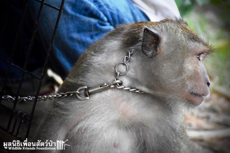 Mono iba a ser asesinado por agresivo 4
