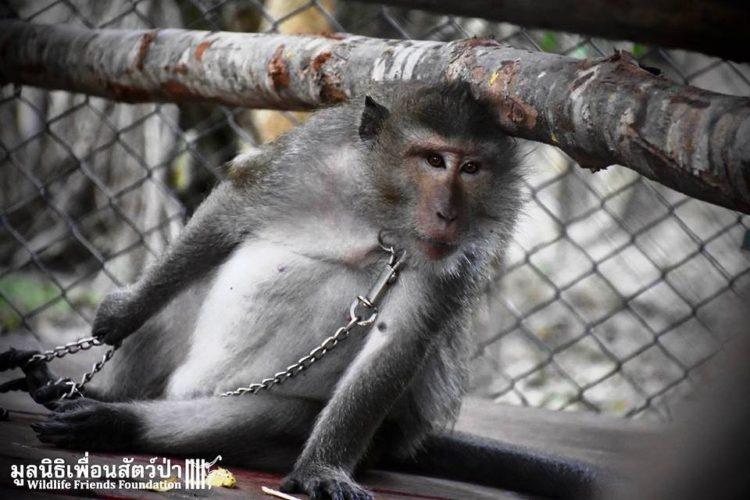 Mono iba a ser asesinado por agresivo 5