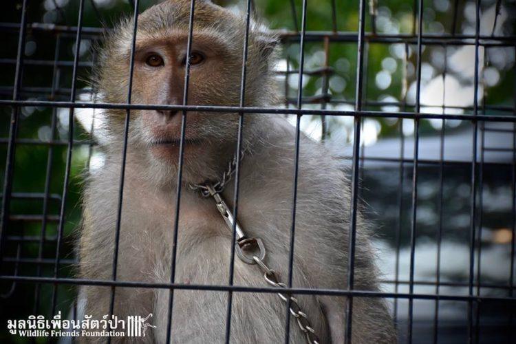 Mono iba a ser asesinado por agresivo 6 1