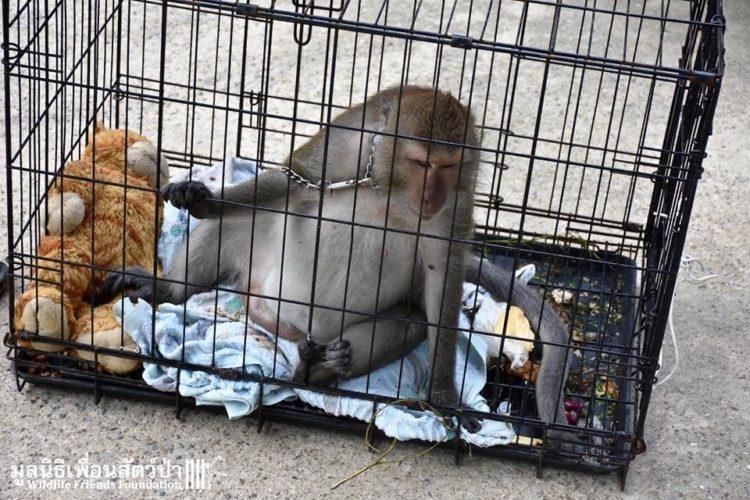 Mono iba a ser asesinado por agresivo 7