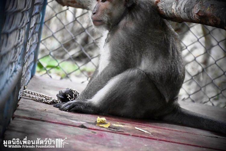 Mono iba a ser asesinado por agresivo 8