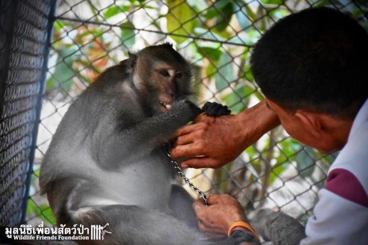 Mono iba a ser asesinado por agresivo 9