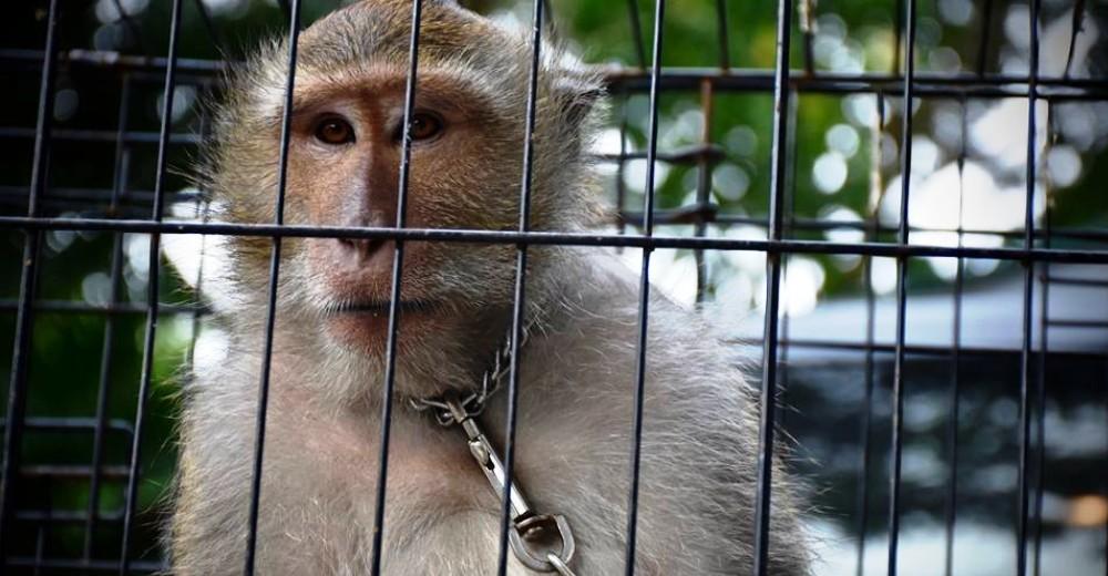 Mono iba a ser asesinado por agresivo portada