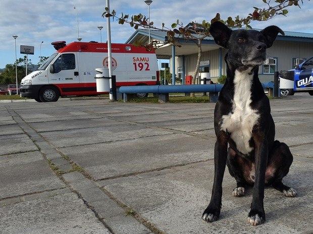 Negao-perro-hospital-brasil 2