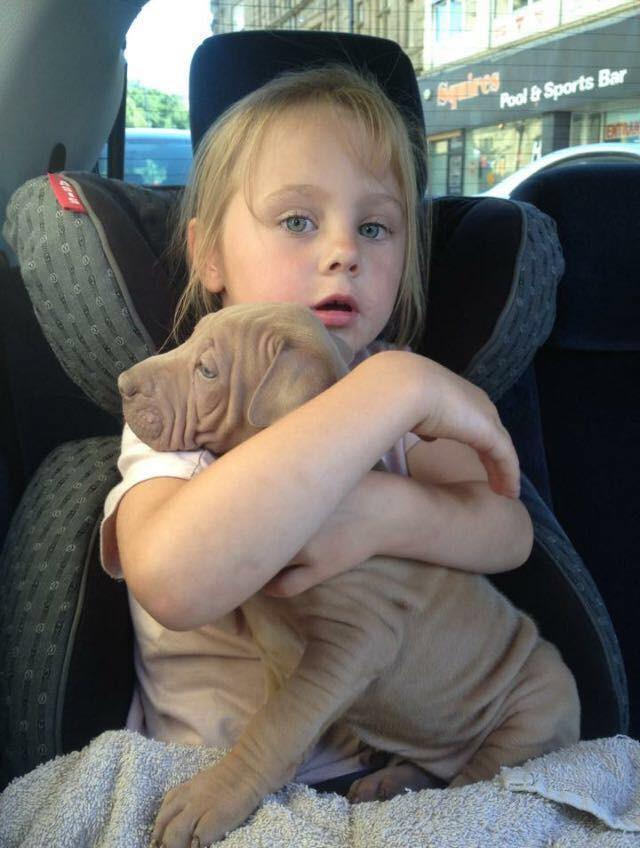 Nena-autismo-pit-bull 4
