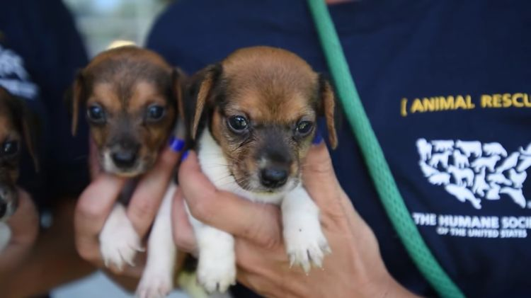 Ohio-70-perros-rescatados 13