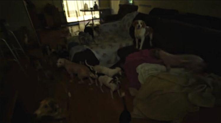 Ohio-70-perros-rescatados 3