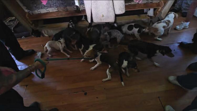 Ohio-70-perros-rescatados 4