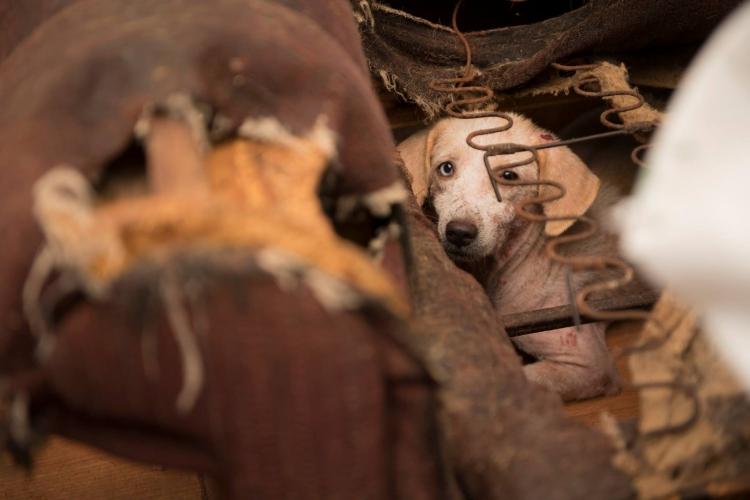 Ohio-70-perros-rescatados 6