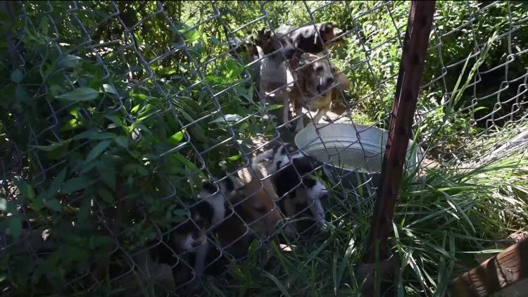 Ohio-70-perros-rescatados 9