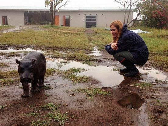 Pequeño Hipopotamo abandonado 4