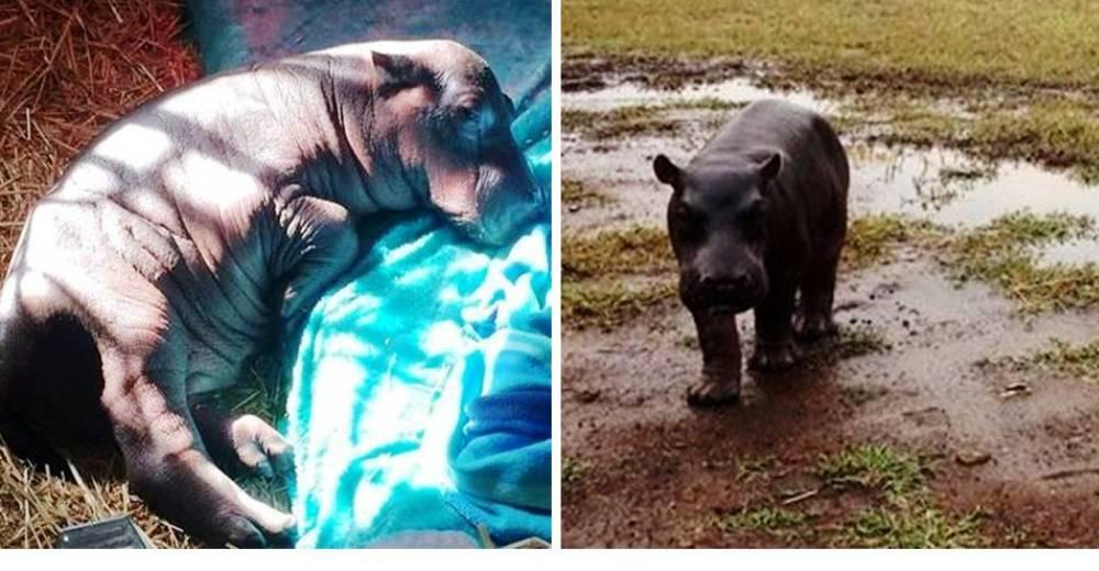 Pequeño Hipopotamo abandonado portada