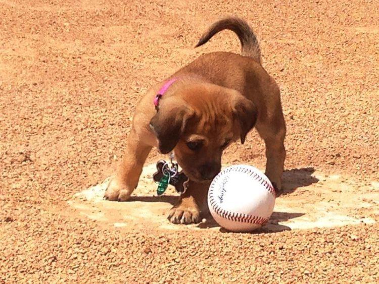 Perrito vestido de baseball 3
