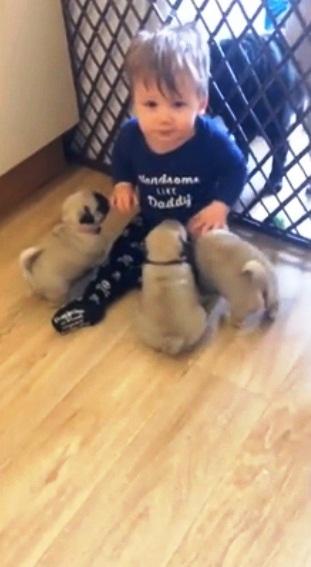 Perritos y Niño 10