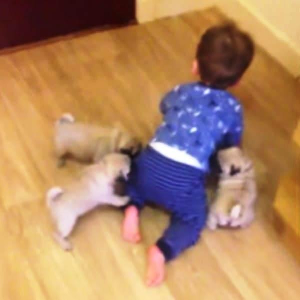 Perritos y Niño 4