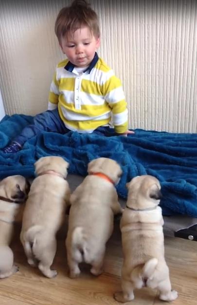 Perritos y Niño 5