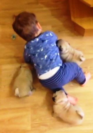 Perritos y Niño 6