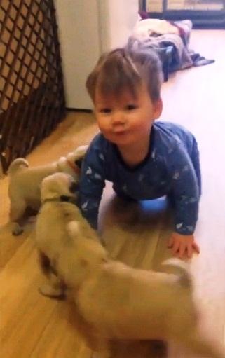 Perritos y Niño 7