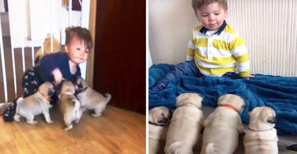 Perritos y Niño portada