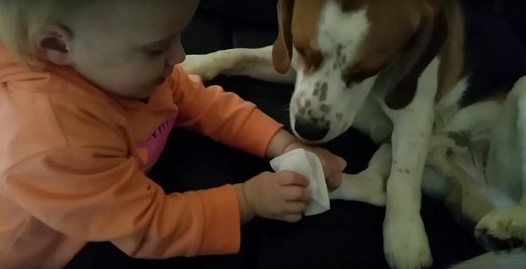 Perro es parte de la familia el mejor regalo de felicidad junto a bebé 1