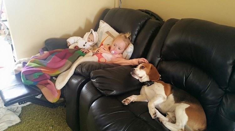 Perro es parte de la familia el mejor regalo de felicidad junto a bebé 2