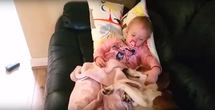 Perro es parte de la familia el mejor regalo de felicidad junto a bebé 4
