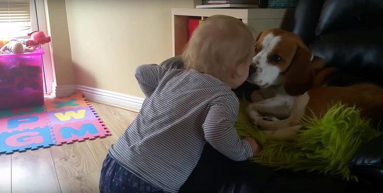 Perro es parte de la familia el mejor regalo de felicidad junto a bebé 5
