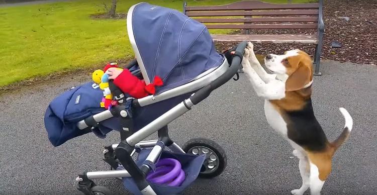 Perro es parte de la familia el mejor regalo de felicidad junto a bebé 6