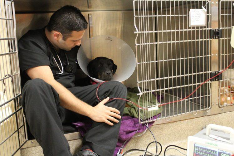 Perro recibe trasnfusion de sangre 7