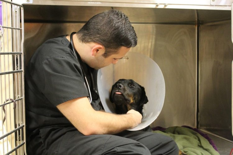 Perro recibe trasnfusion de sangre 8