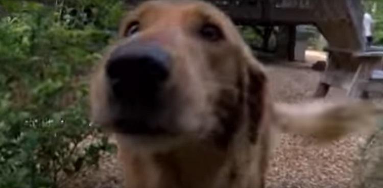 Perro sorprende sale escondido ir de vuelta ciudad para visitar amigos 4