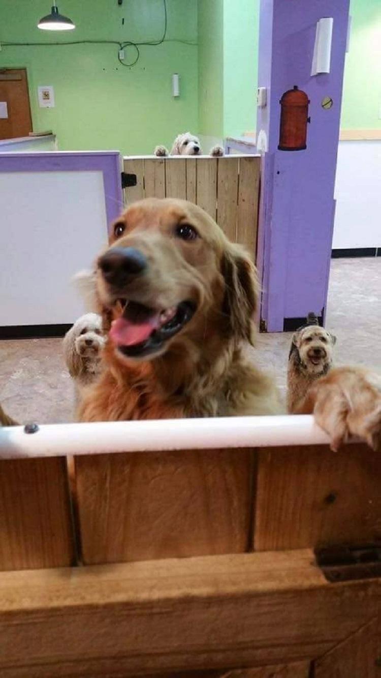 Perro sorprende sale escondido ir de vuelta ciudad para visitar amigos 7