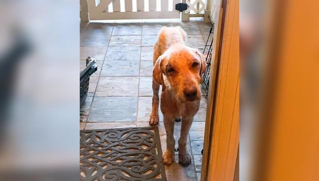 Perro tenia miedo de ir a nueva casa 1