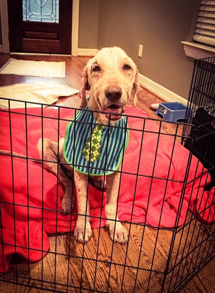 Perro tenia miedo de ir a nueva casa 5