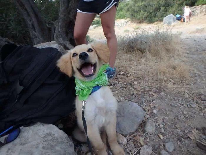 Perros-adoptados-primer-dia-en-casa 5