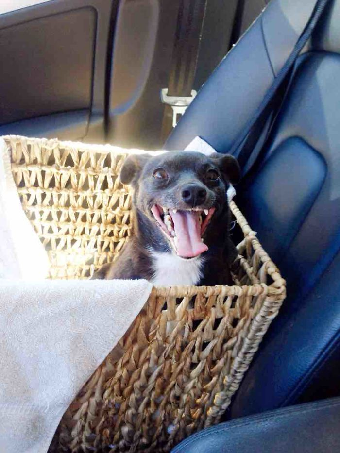 Perros-adoptados-primer-dia-en-casa 6