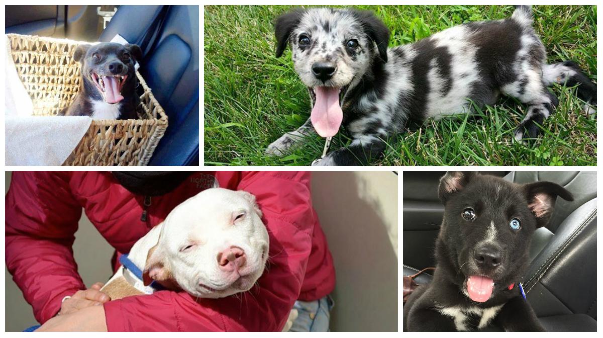 Perros-adoptados-primer-dia-en-casa-portada