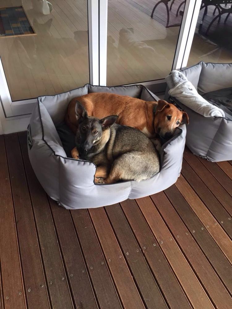 Perros-enamorados 12