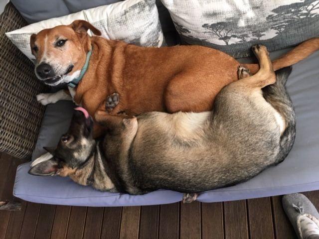 Perros-enamorados 8