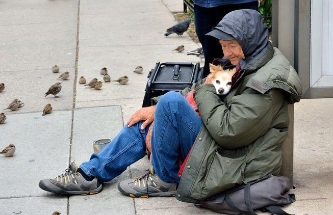 Perros no abandonan a los humanos 18