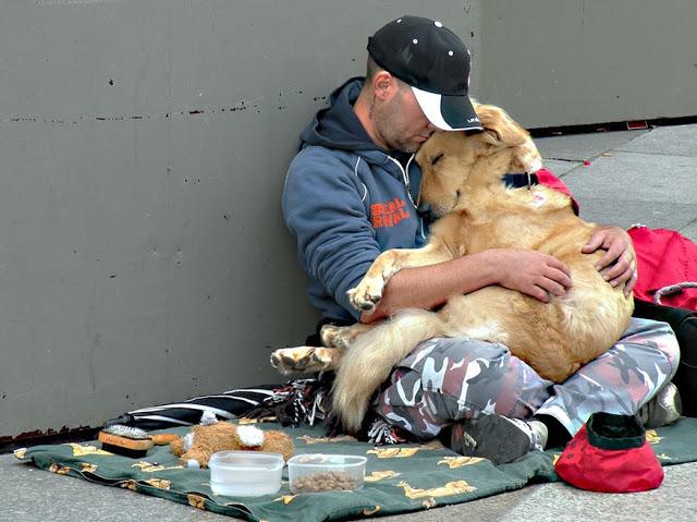 Perros no abandonan a los humanos 25