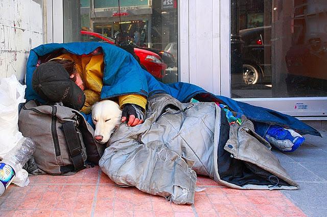 Perros no abandonan a los humanos 26