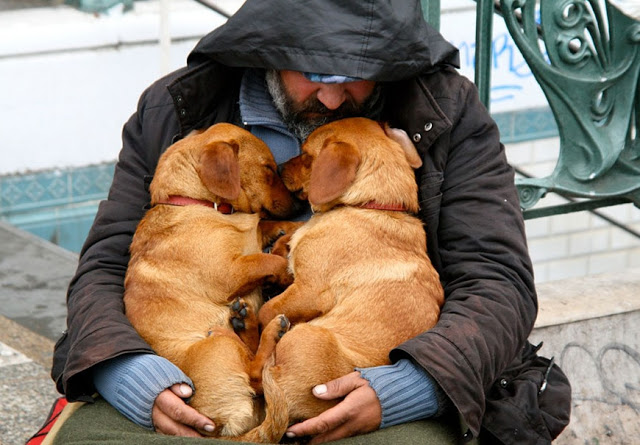 Perros no abandonan a los humanos 28