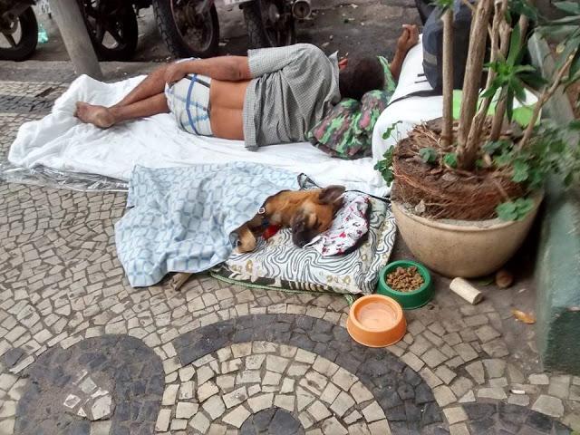 Perros no abandonan a los humanos 43